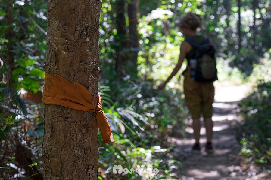 monks trail mnisi szlak