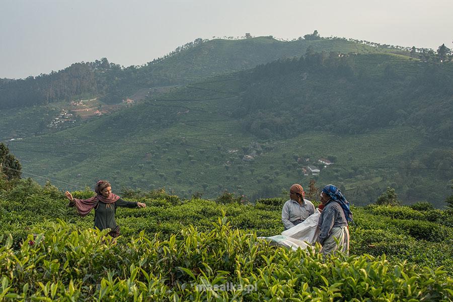 plantacje herbaty kotagiri
