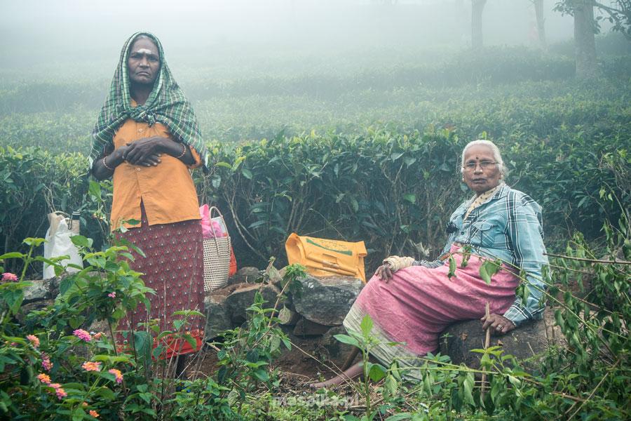 nilgiri tamilnadu