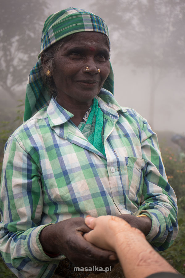 na plantacji herbaty w kotagiri