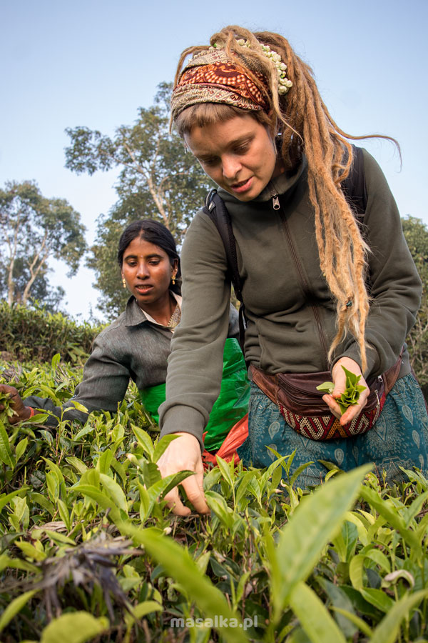 plantacje hebaty w nilgiri