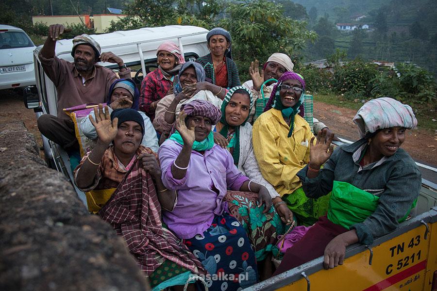 na plantacji herbaty w nilgiri