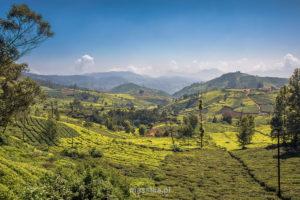 kotagiri góry nilgiri