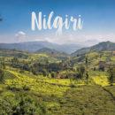 góry nilgiri tamilnadu